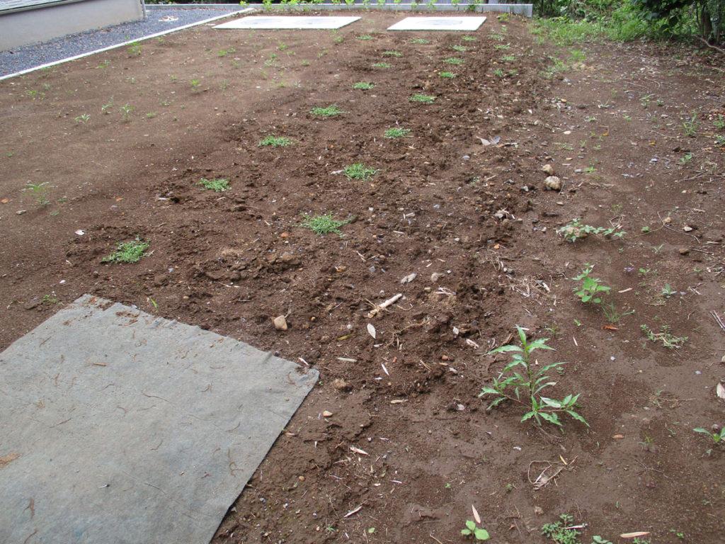庭 植物 草 草花 多年草 グランドカバー クラピア
