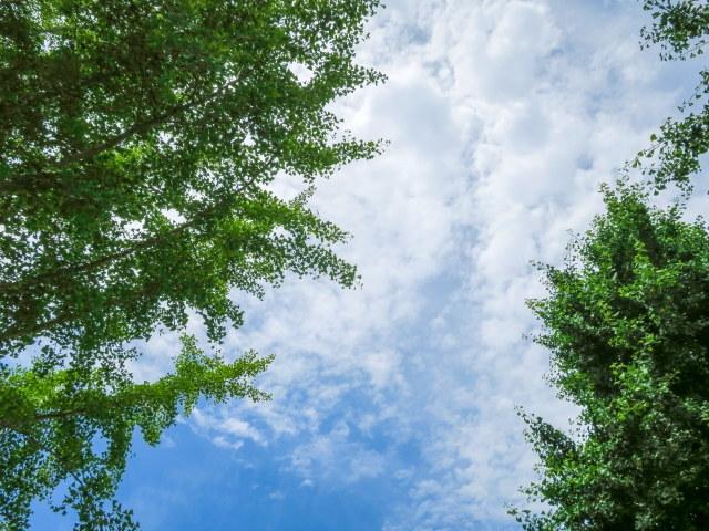 晴れ空 木